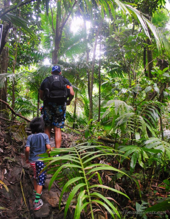 El Yunque Rainforest Puerto Rico Hiking