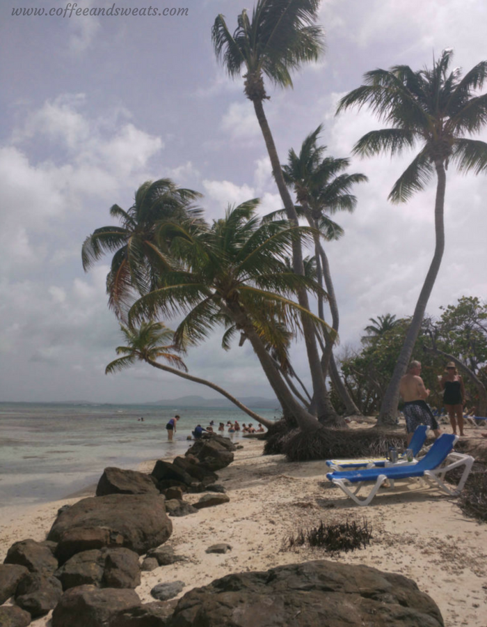 Palomino Island Palm Trees
